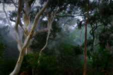 gums-in-the-mist