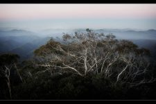 snow-gum-new-england-national-park